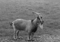 Verbraucherschützer errichten Orwells Farm der Tiere