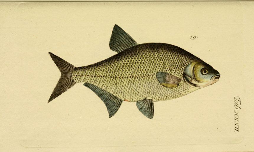 Tichys Einblick: Die fetten Fische aus Frankfurt