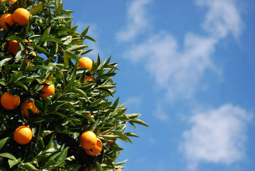 Gegen Protektionismus: Der europäische Baum muss Früchte tragen können